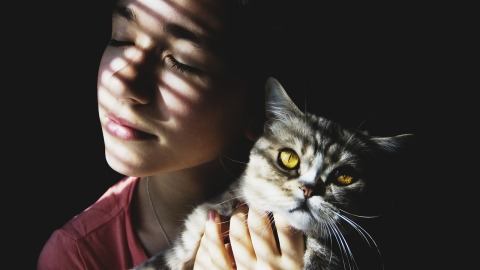 Когда кошка выбирает тебя (картинка)